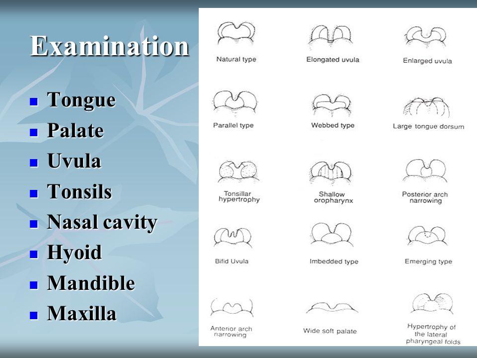 Examination Tongue Tongue Palate Palate Uvula Uvula Tonsils Tonsils Nasal cavity Nasal cavity Hyoid Hyoid Mandible Mandible Maxilla Maxilla