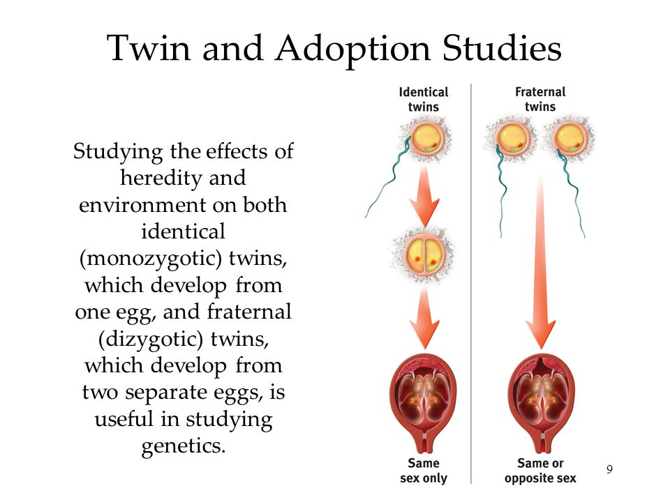 9 Twin and Adoption Studies Studying the effects of heredity and environment on both identical (monozygotic) twins, which develop from one egg, and fraternal (dizygotic) twins, which develop from two separate eggs, is useful in studying genetics.