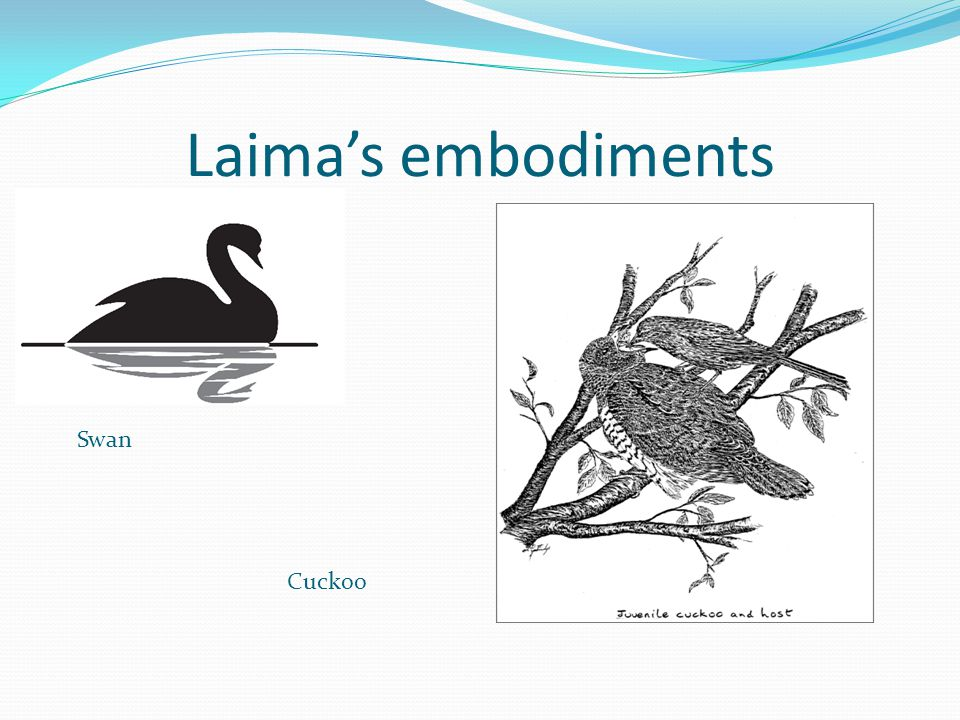 Laima's embodiments Swan Cuckoo