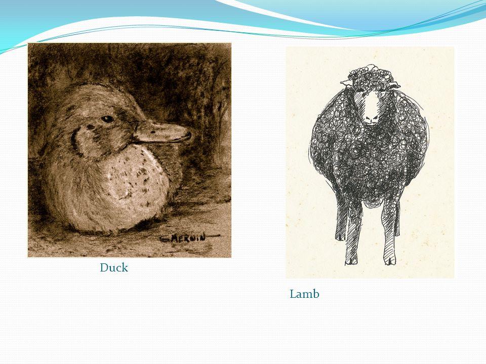 Duck Lamb