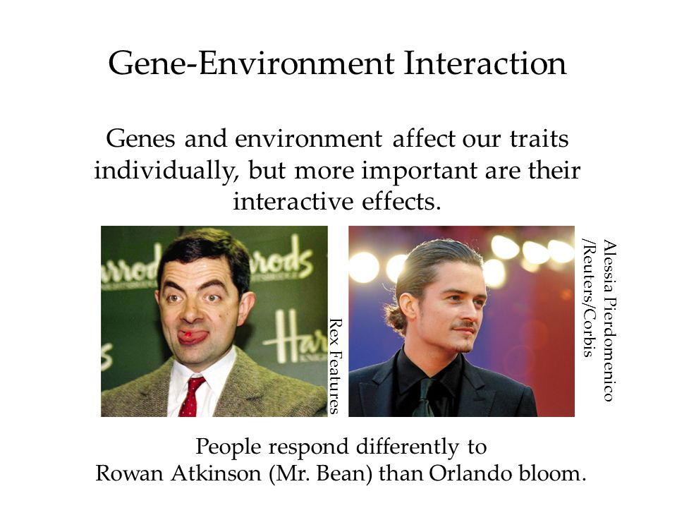 Gene-Environment Interaction Genes and environment affect our traits individually, but more important are their interactive effects.