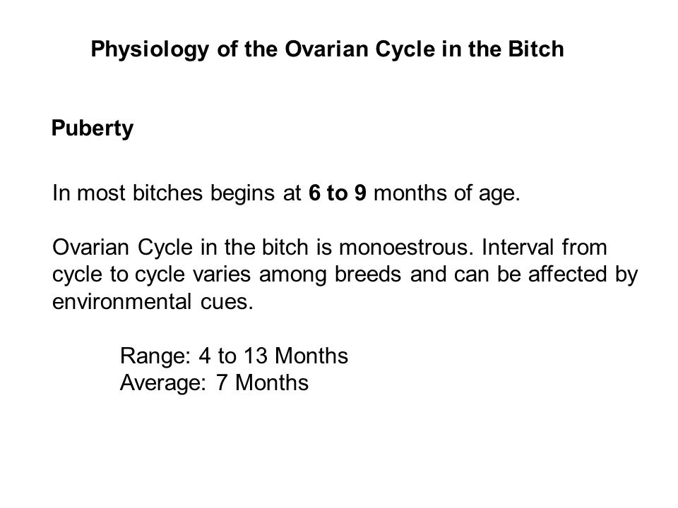 Physiology of the Ovarian Cycle in the Bitch Puberty In most bitches begins at 6 to 9 months of age.