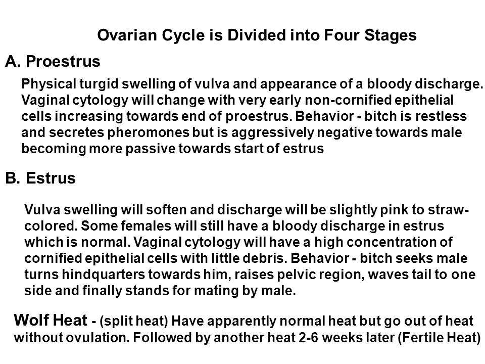 Ovarian Cycle is Divided into Four Stages A. Proestrus B. Estrus Physical turgid swelling of vulva and appearance of a bloody discharge. Vaginal cytol
