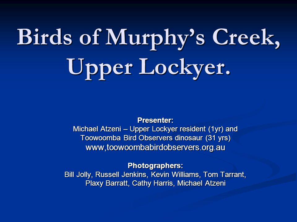 Birds of Murphy's Creek, Upper Lockyer.