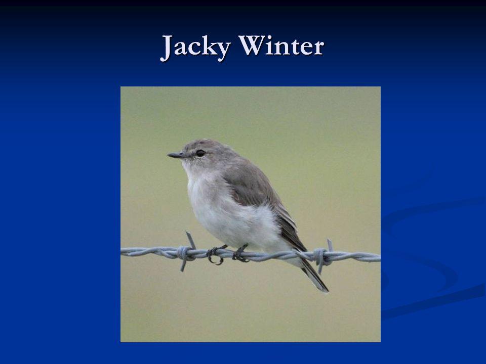 Jacky Winter