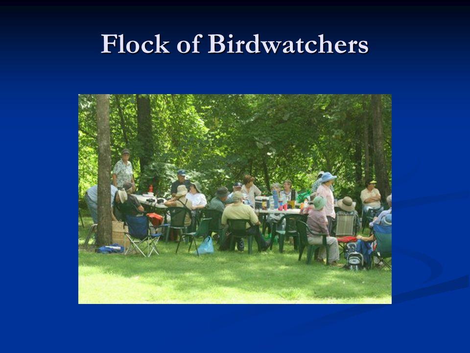 Flock of Birdwatchers