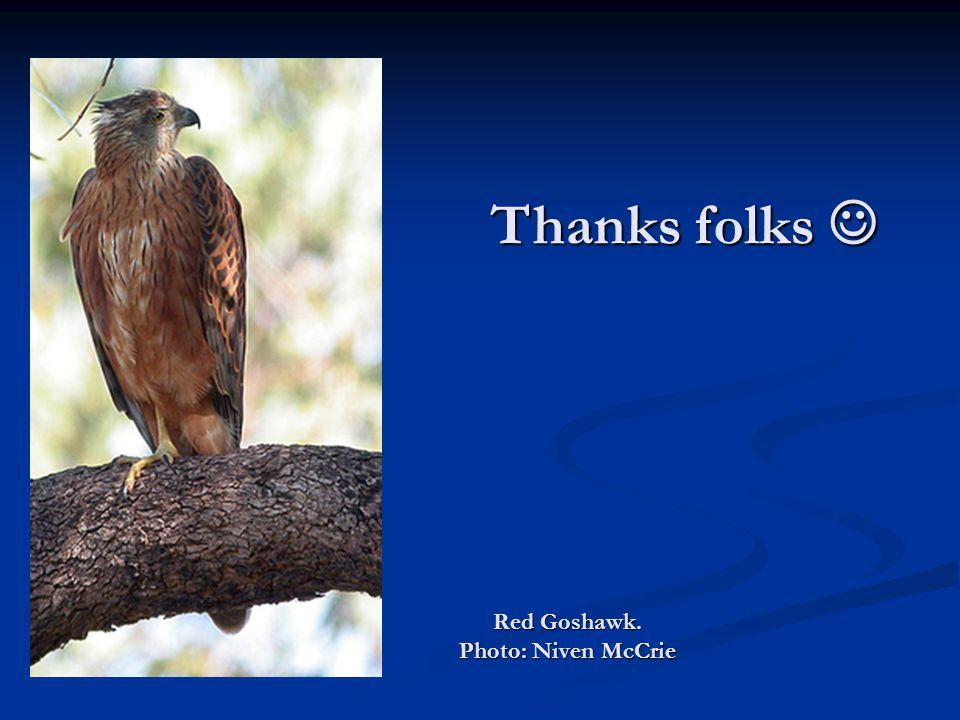 Red Goshawk. Photo: Niven McCrie Thanks folks Thanks folks
