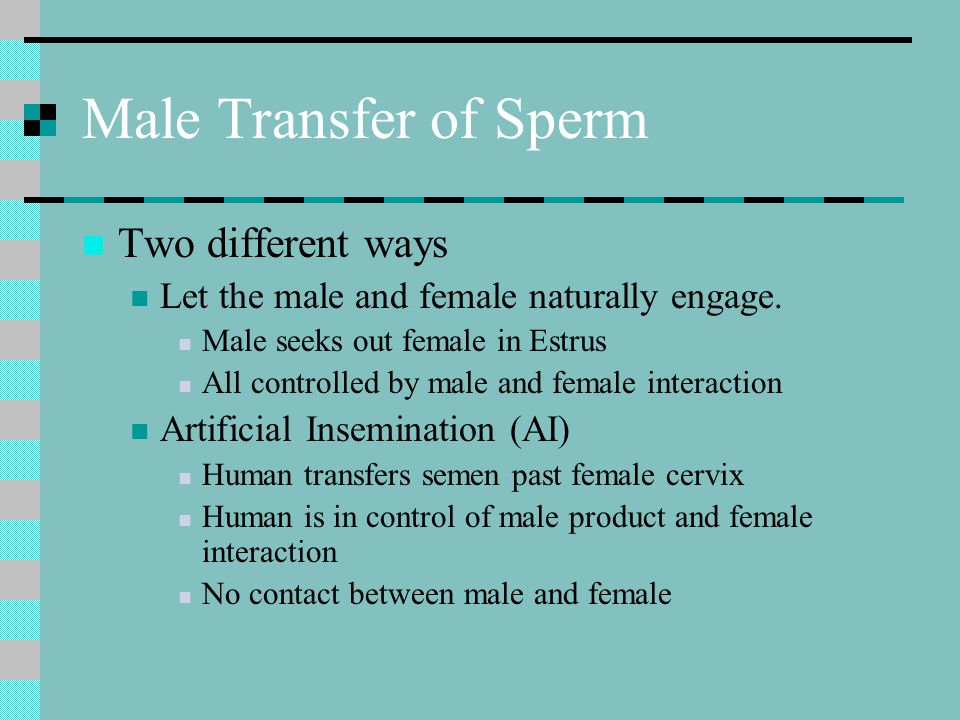 Male Transfer of Sperm Two different ways Let the male and female naturally engage. Male seeks out female in Estrus All controlled by male and female