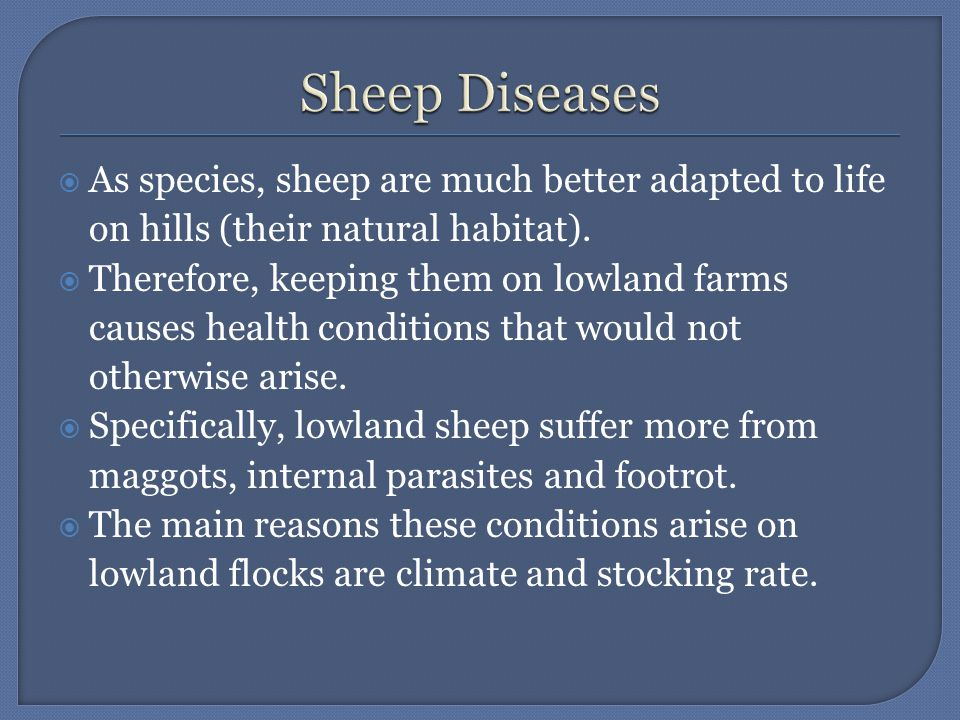  As species, sheep are much better adapted to life on hills (their natural habitat).