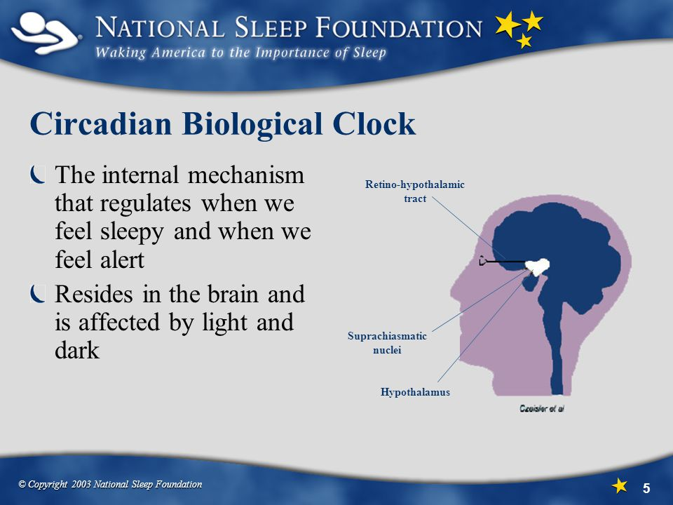 © Copyright 2003 National Sleep Foundation 5 Circadian Biological Clock The internal mechanism that regulates when we feel sleepy and when we feel alert Resides in the brain and is affected by light and dark Retino-hypothalamic tract Suprachiasmatic nuclei Hypothalamus