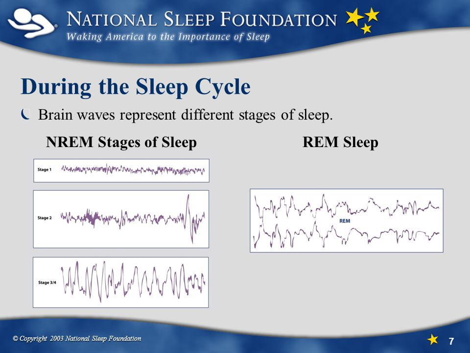 © Copyright 2003 National Sleep Foundation 7 During the Sleep Cycle Brain waves represent different stages of sleep.