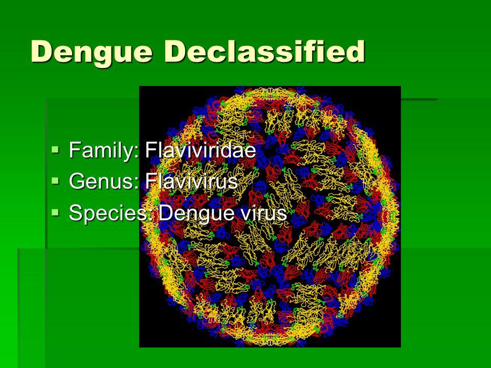 Dengue Declassified  Family: Flaviviridae  Genus: Flavivirus  Species: Dengue virus