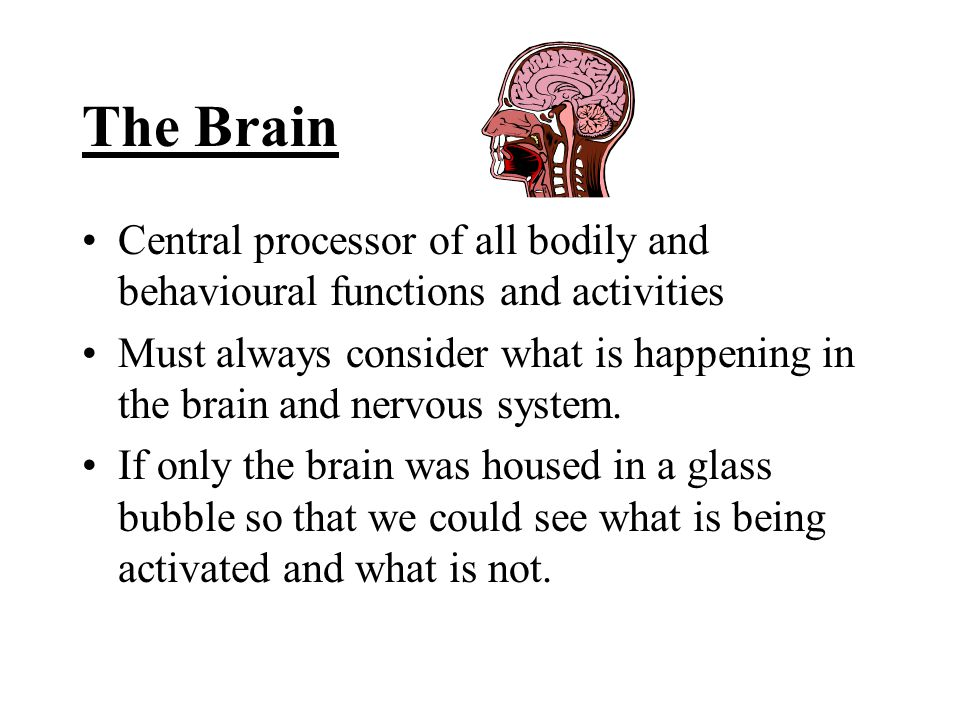 The Brain Central processor of all bodily and behavioural functions and activities Must always consider what is happening in the brain and nervous system.