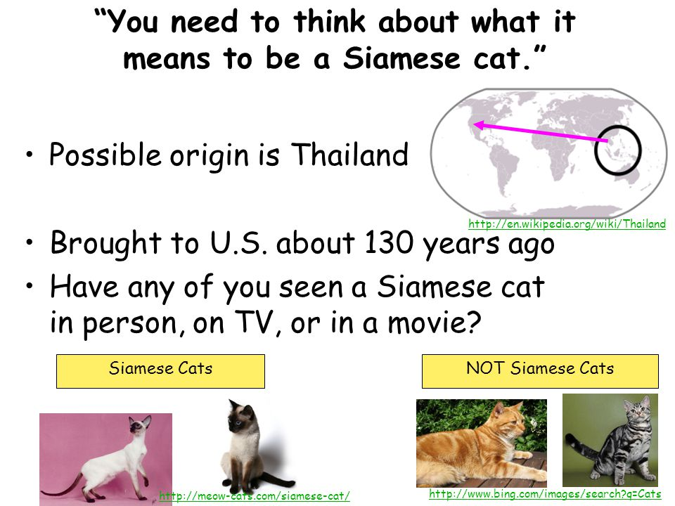 You need to think about what it means to be a Siamese cat. Possible origin is Thailand Brought to U.S.