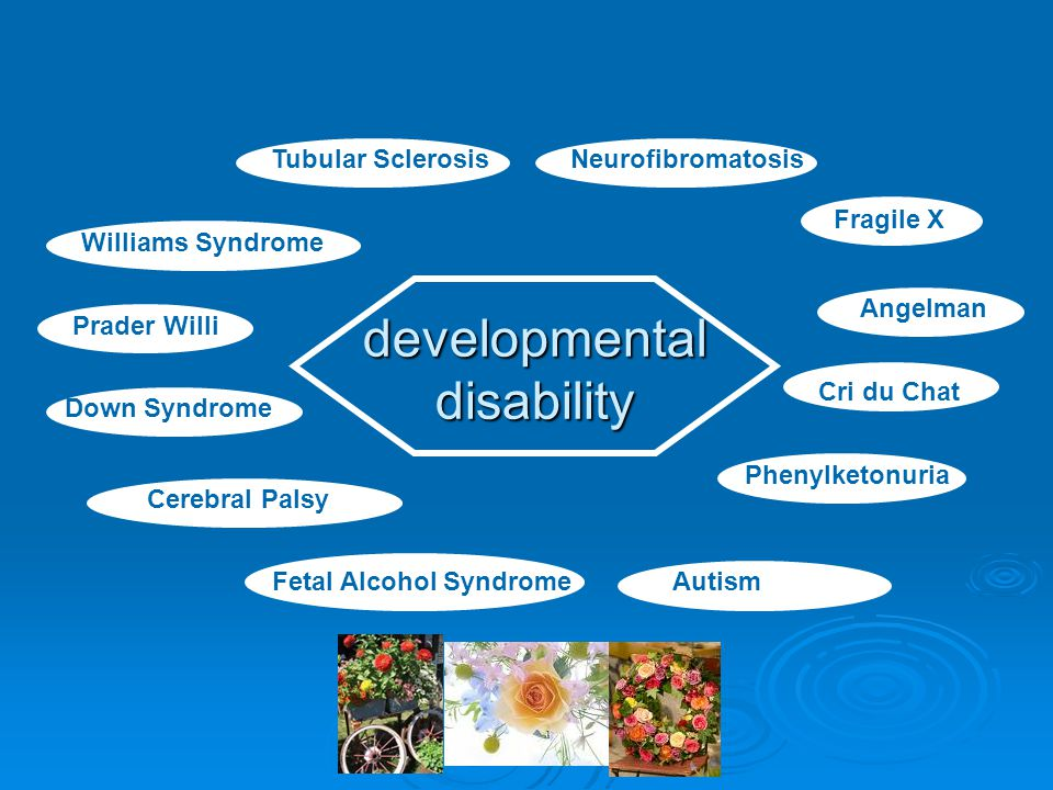 developmental disability Down Syndrome Cerebral Palsy Autism Tubular Sclerosis Cri du Chat Prader Willi Angelman Neurofibromatosis Fetal Alcohol Syndrome Fragile X Phenylketonuria Williams Syndrome