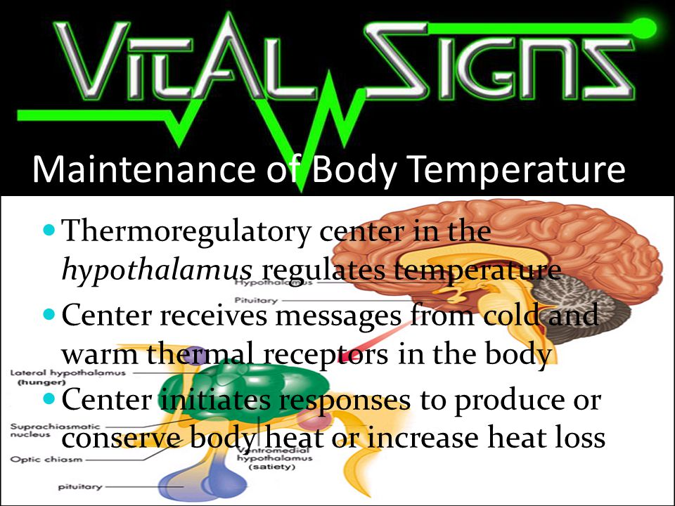 Heat Production Primary source is metabolism Hormones, muscle movements, and exercise increase metabolism Epinephrine and norepinephrine are released and alter metabolism Energy production decreases and heat production increases