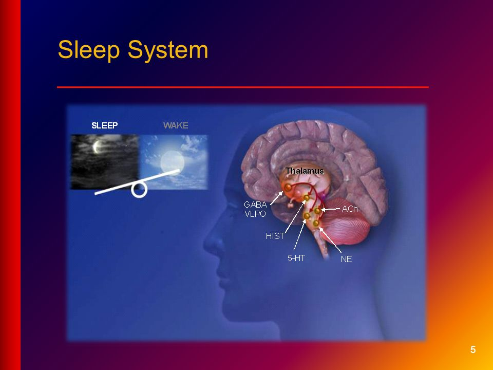 5 Sleep System ___________________________