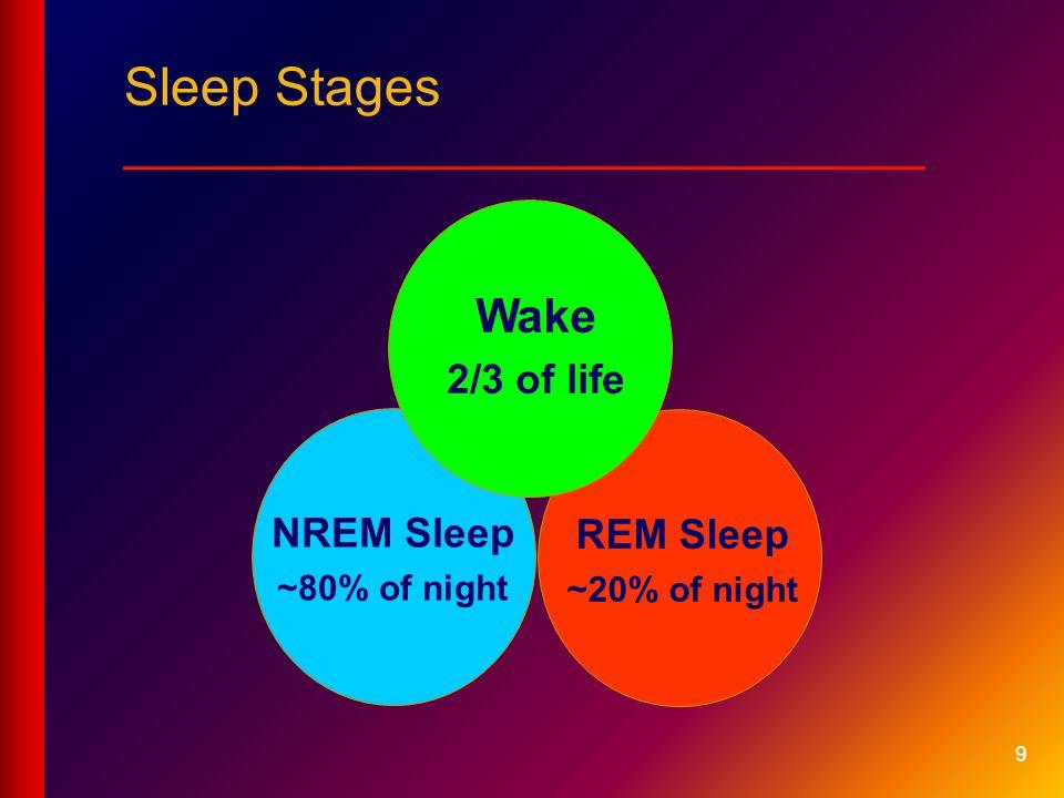 9 REM Sleep ~20% of night NREM Sleep ~80% of night Wake 2/3 of life Sleep Stages ___________________________