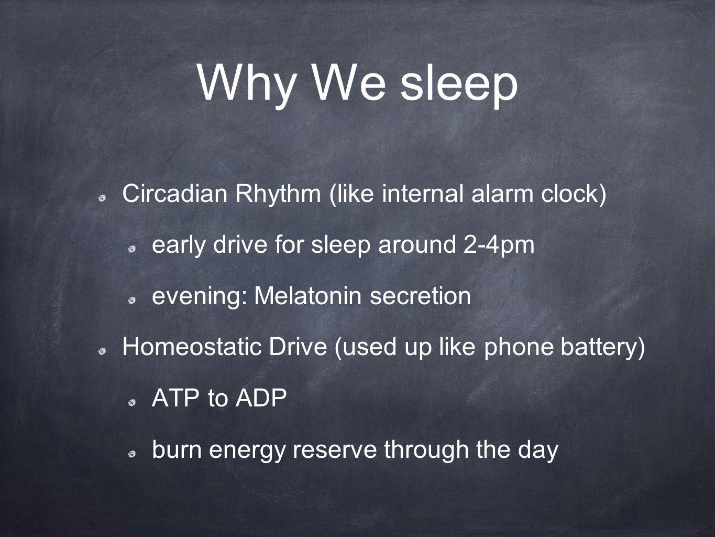Why We sleep Circadian Rhythm (like internal alarm clock) early drive for sleep around 2-4pm evening: Melatonin secretion Homeostatic Drive (used up like phone battery) ATP to ADP burn energy reserve through the day