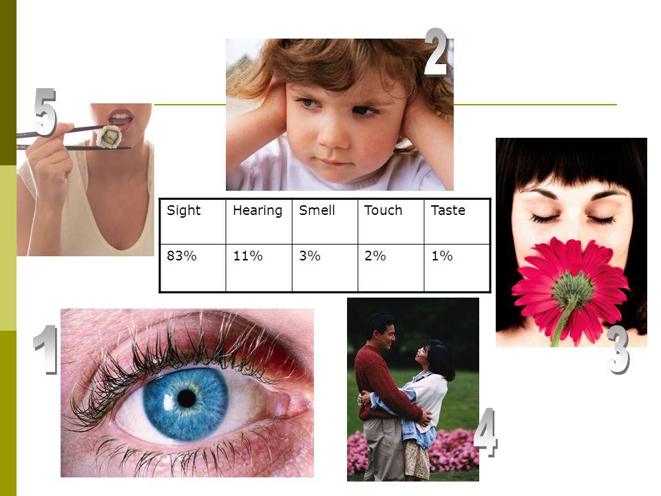 SightHearingSmellTouchTaste 83%11%3%2%1%