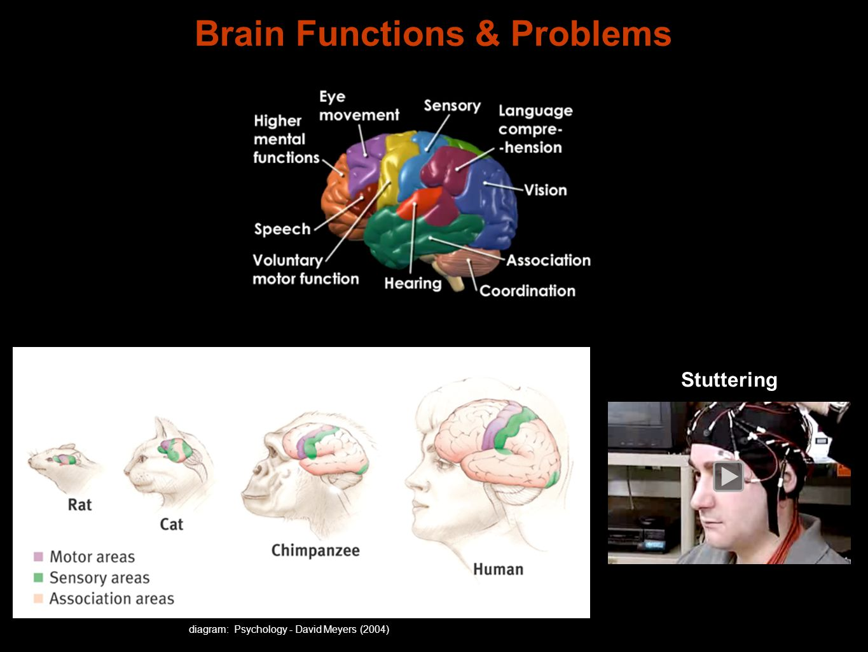 Brain Functions & Problems diagram: Psychology - David Meyers (2004) Stuttering