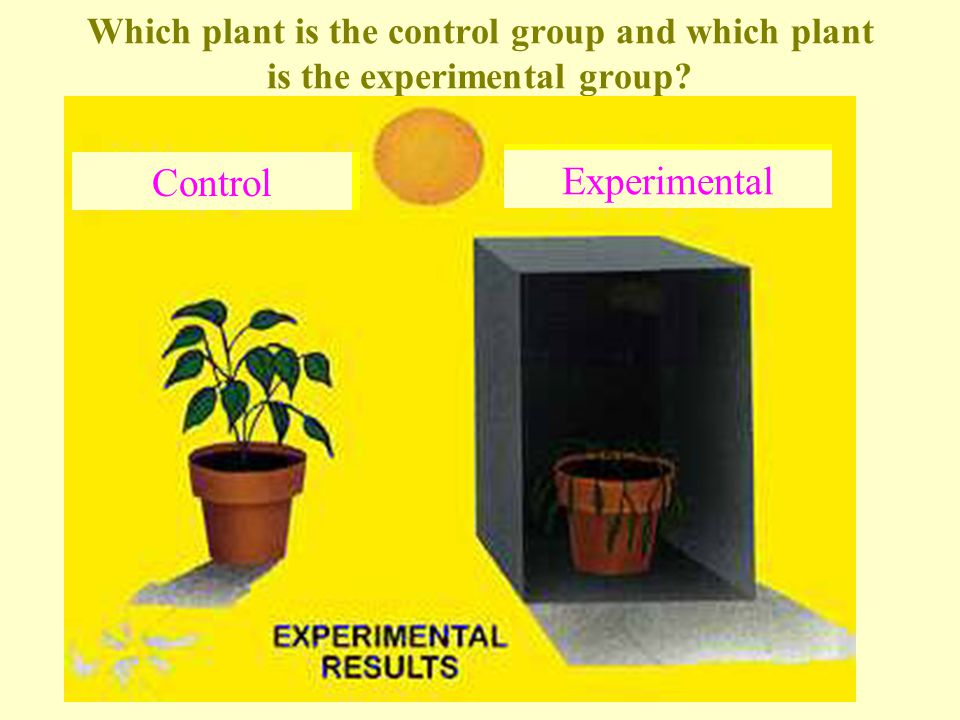 What are the variables for the experimental group.