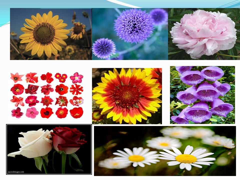 Describe FLOWER What are the COMMON qualities of a flower.