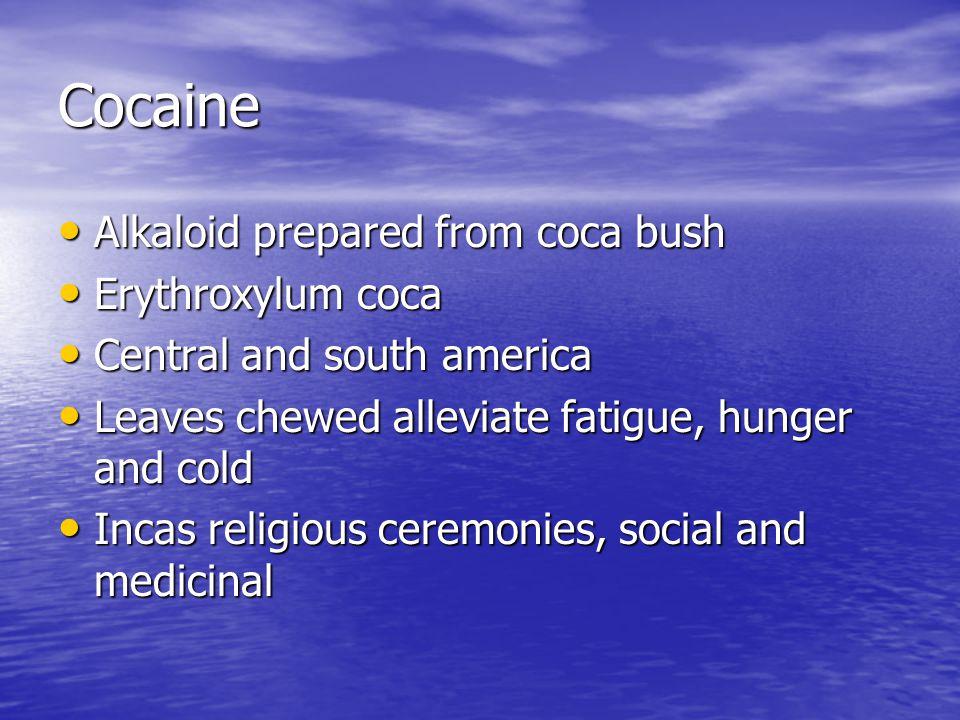 Cocaine Alkaloid prepared from coca bush Alkaloid prepared from coca bush Erythroxylum coca Erythroxylum coca Central and south america Central and south america Leaves chewed alleviate fatigue, hunger and cold Leaves chewed alleviate fatigue, hunger and cold Incas religious ceremonies, social and medicinal Incas religious ceremonies, social and medicinal