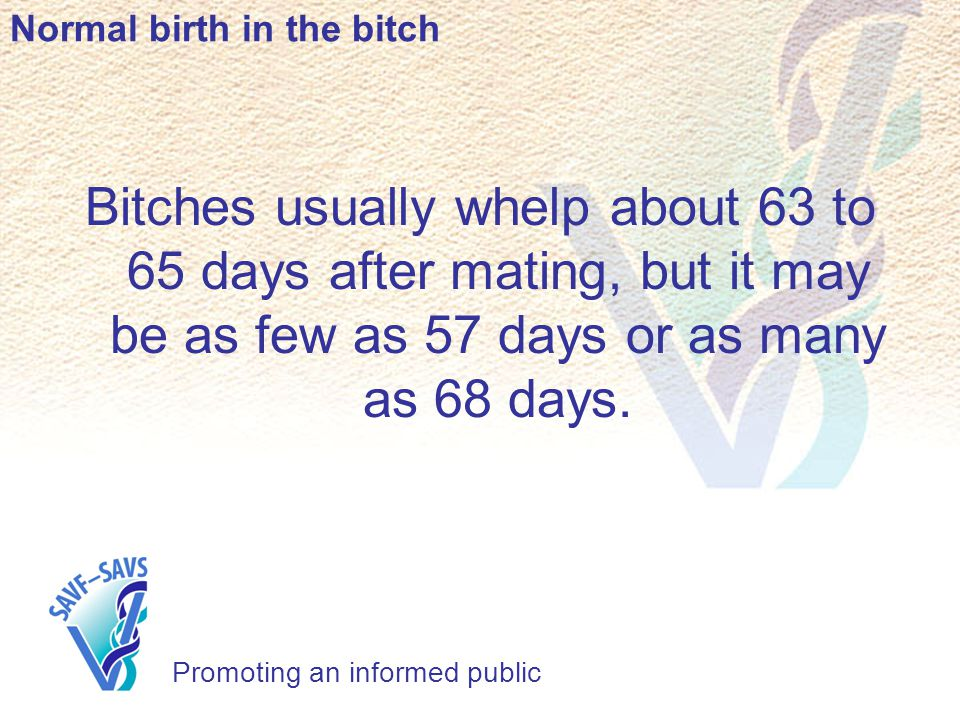 Normal birth in the bitch Promoting an informed public Bitches usually whelp about 63 to 65 days after mating, but it may be as few as 57 days or as many as 68 days.