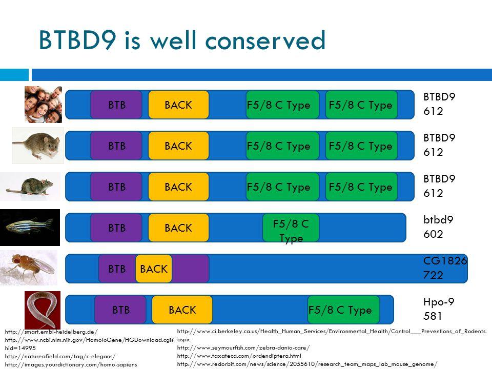 BTBD9 is well conserved 0100200400600700 BTBBACKF5/8 C Type BTBBACKF5/8 C Type BTBBACKF5/8 C Type BTBBACK F5/8 C Type BTBBACKBTBBACKF5/8 C Type BTBD9