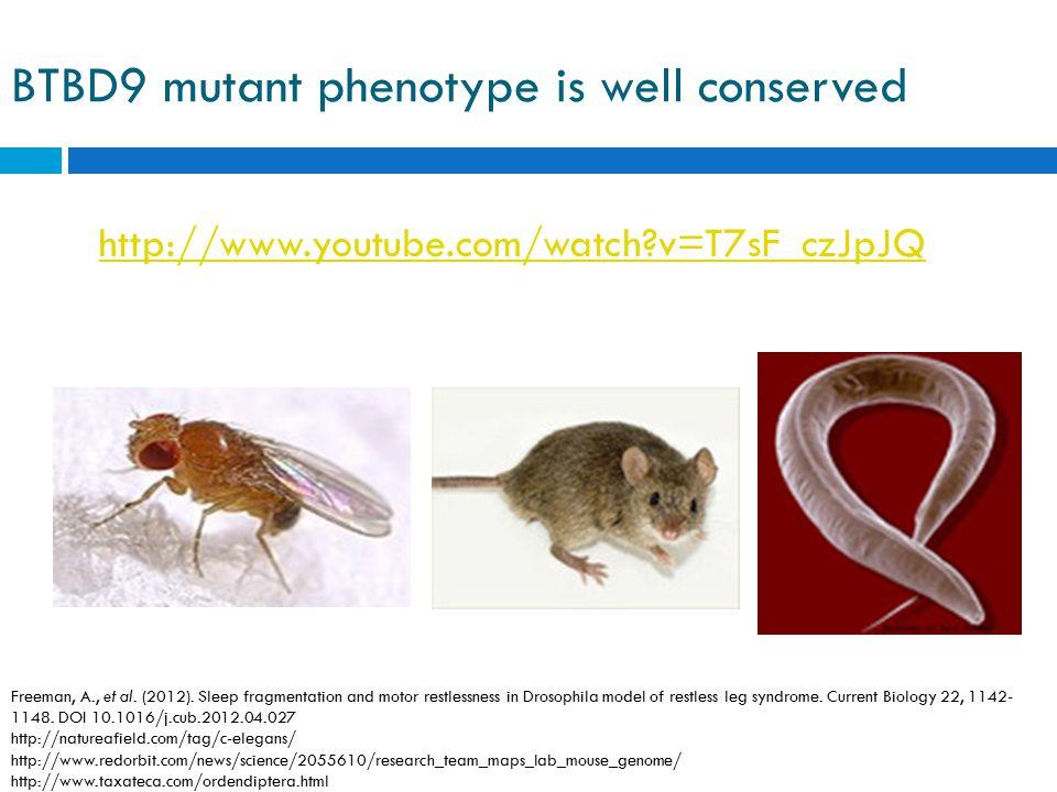 BTBD9 mutant phenotype is well conserved http://www.youtube.com/watch?v=T7sF_czJpJQ Freeman, A., et al. (2012). Sleep fragmentation and motor restless