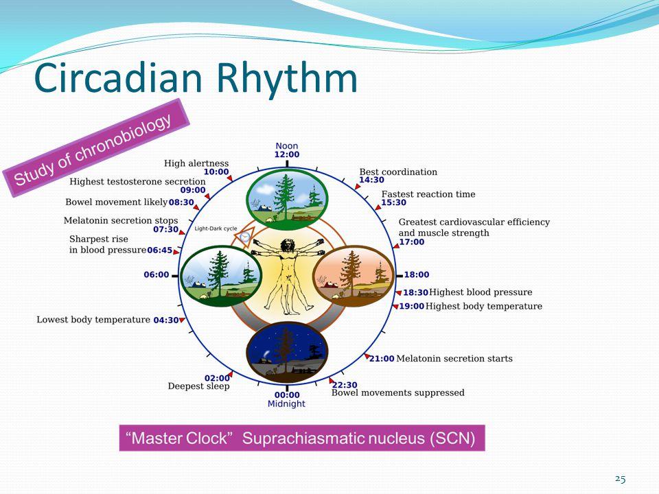 Circadian Rhythm 25
