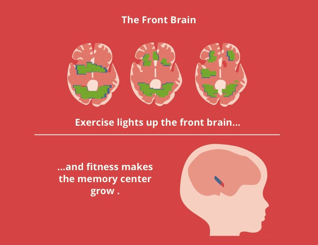 Exercise lights up the front brain... PPC EEFSEFPFC...and fitness makes the memory center grow.