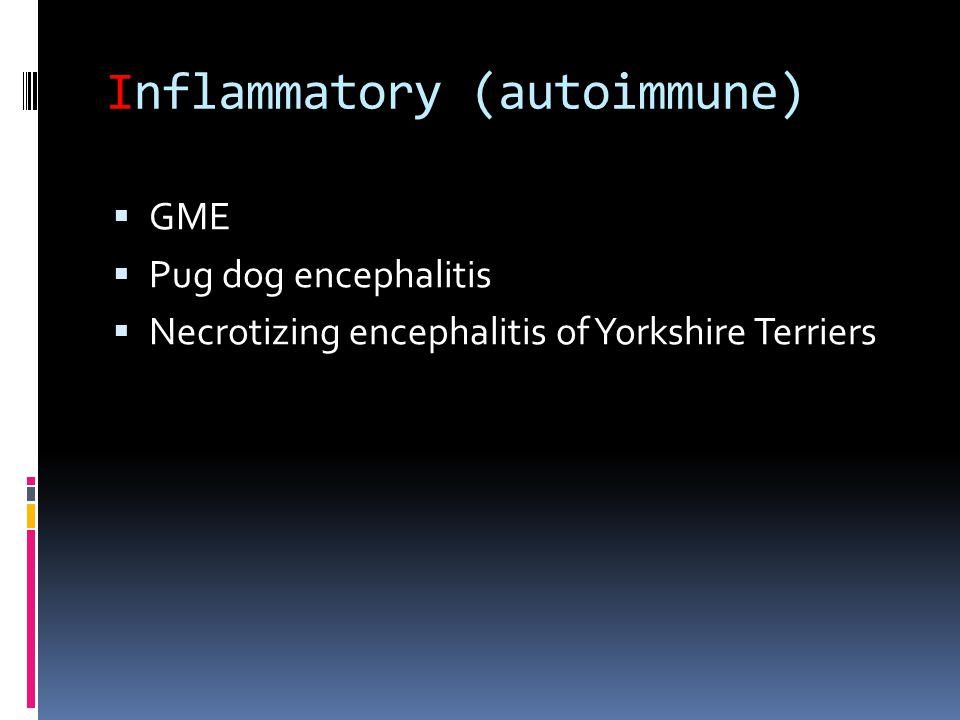Inflammatory (autoimmune)  GME  Pug dog encephalitis  Necrotizing encephalitis of Yorkshire Terriers