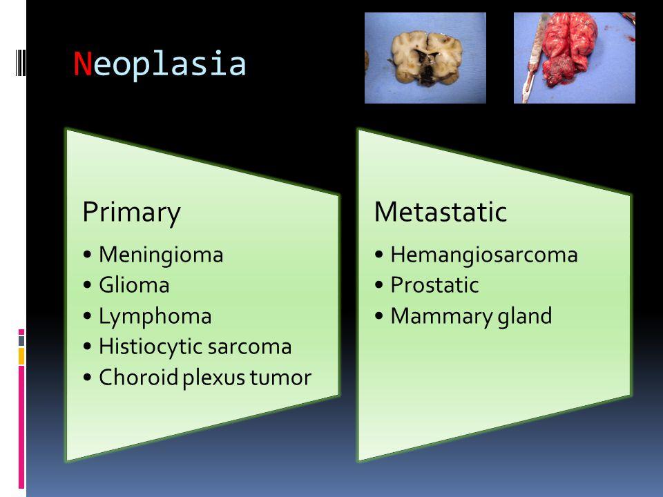 Neoplasia Primary Meningioma Glioma Lymphoma Histiocytic sarcoma Choroid plexus tumor Metastatic Hemangiosarcoma Prostatic Mammary gland