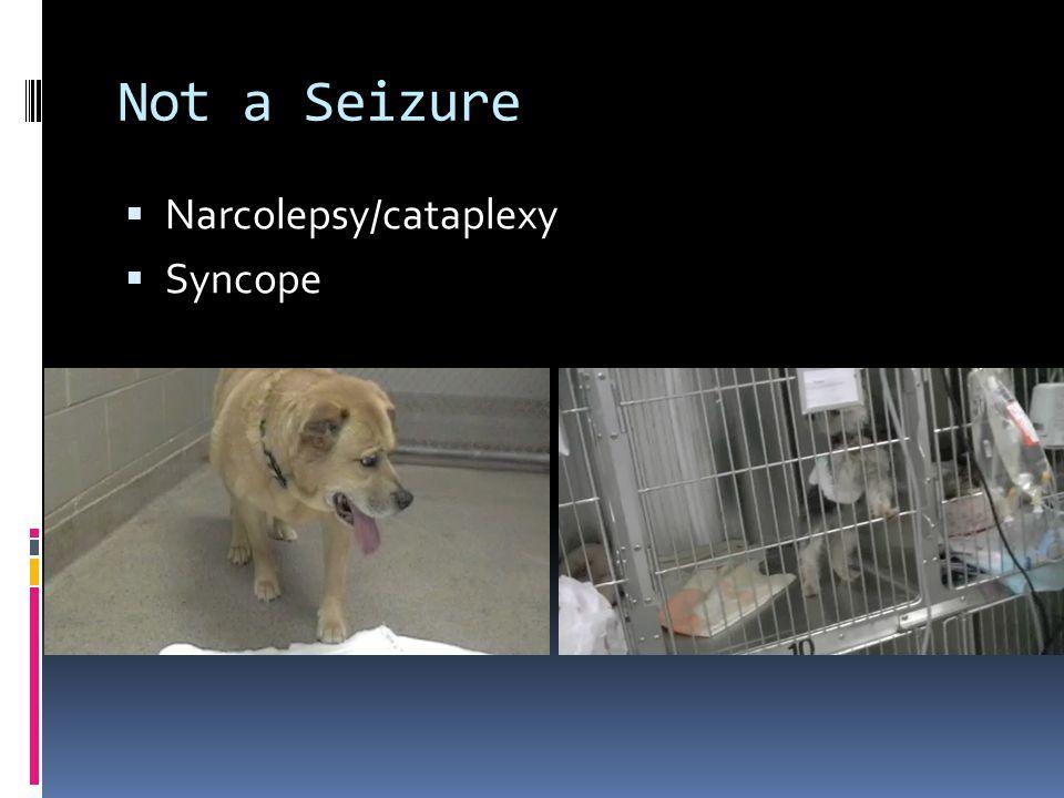 Not a Seizure  Narcolepsy/cataplexy  Syncope