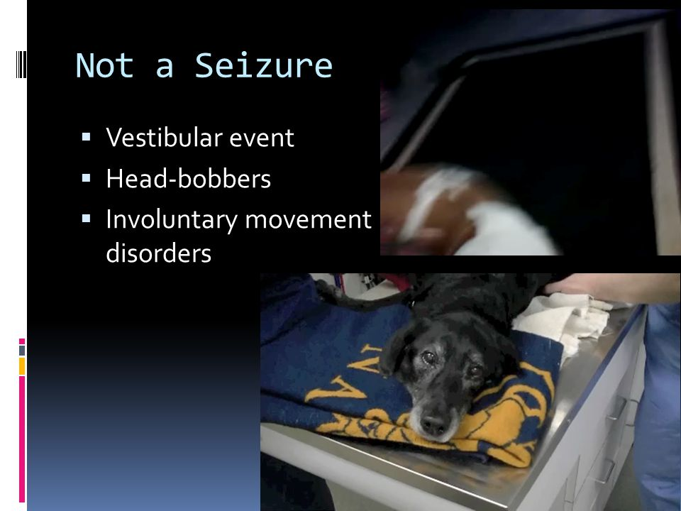 Not a Seizure  Vestibular event  Head-bobbers  Involuntary movement disorders