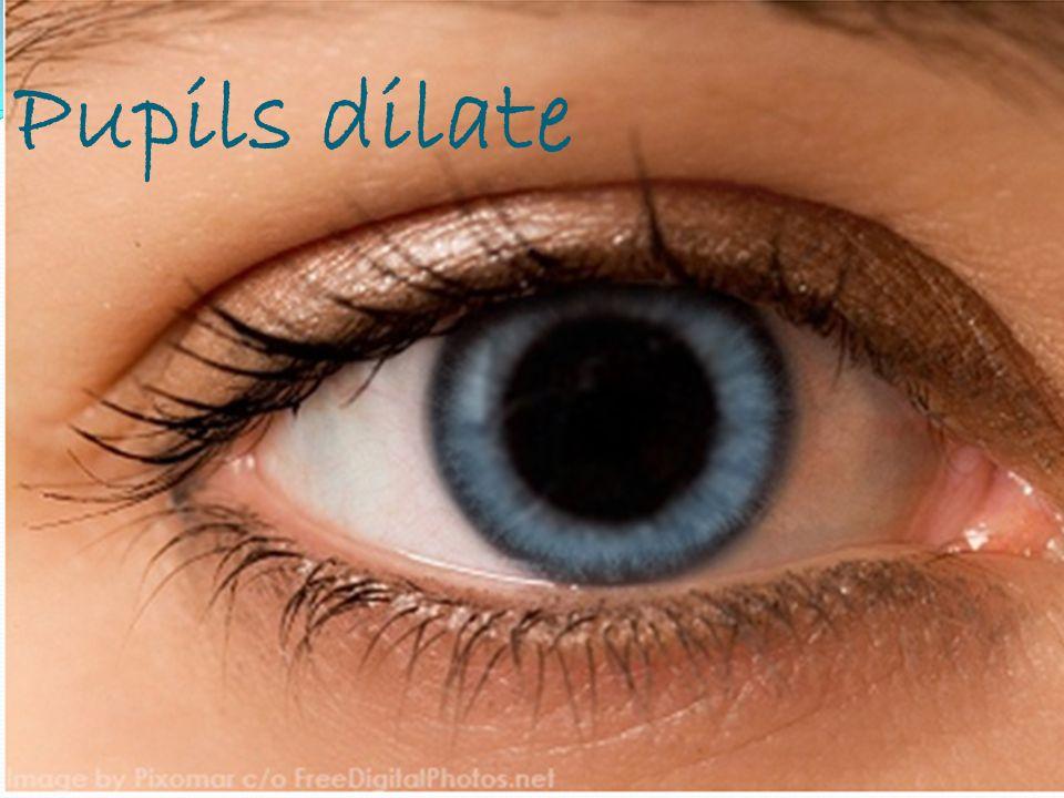 Pupils dilate