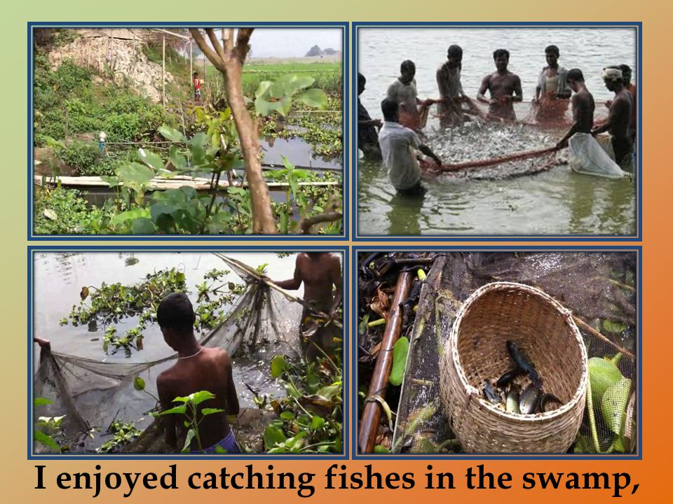 I enjoyed catching fishes in the swamp,