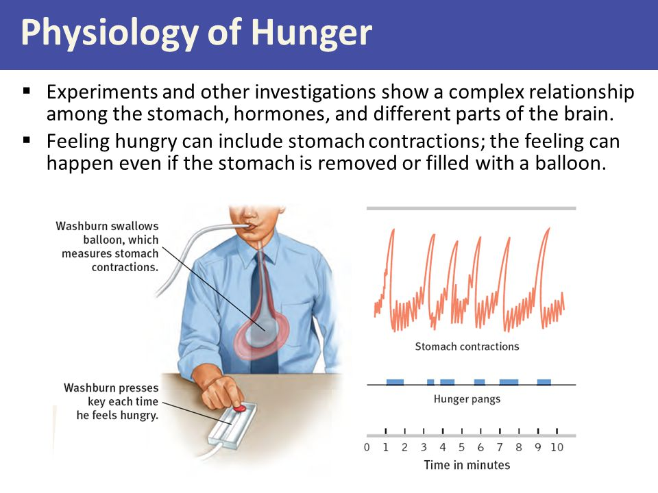 Physiology of Hunger  Experiments and other investigations show a complex relationship among the stomach, hormones, and different parts of the brain.