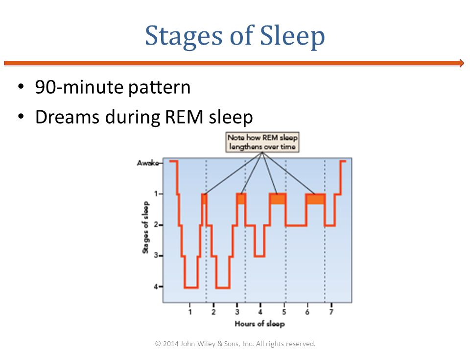 90-minute pattern Dreams during REM sleep Stages of Sleep © 2014 John Wiley & Sons, Inc. All rights reserved.