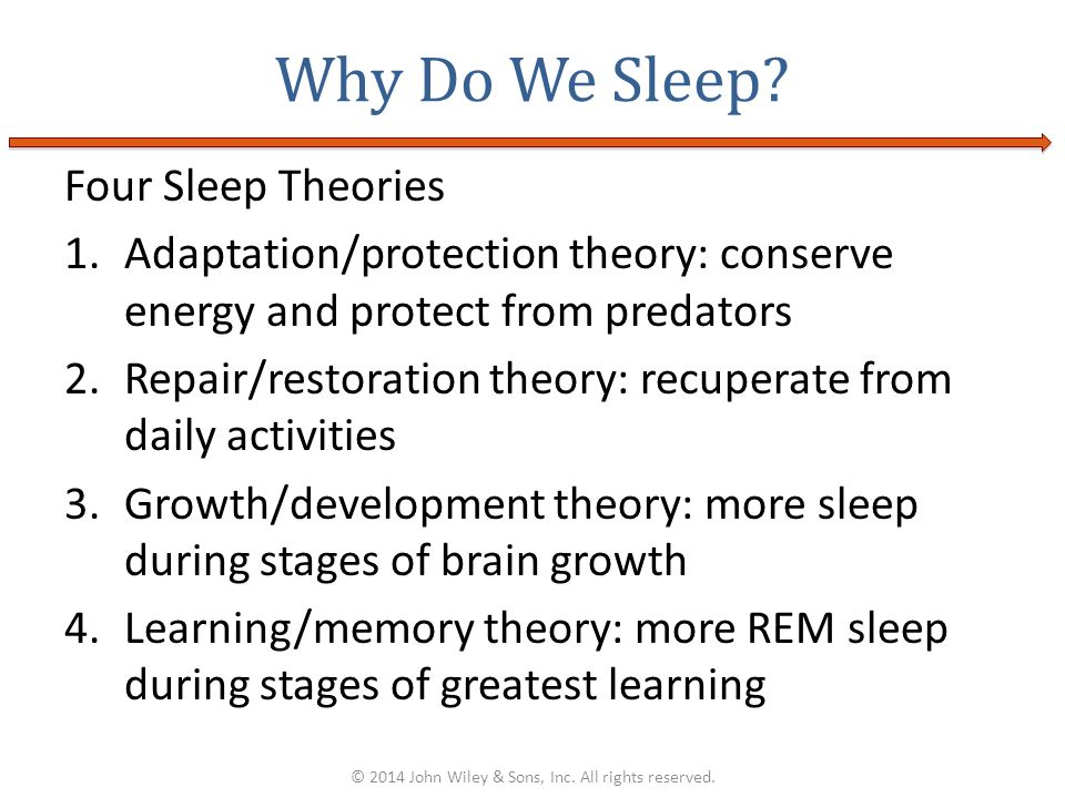 Four Sleep Theories 1.Adaptation/protection theory: conserve energy and protect from predators 2.Repair/restoration theory: recuperate from daily acti