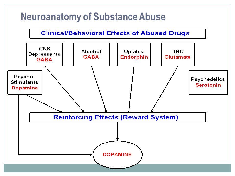 Neuroanatomy of Substance Abuse