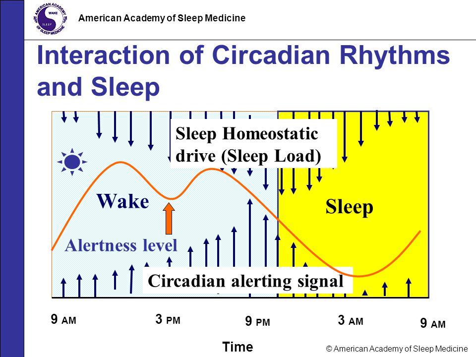 © American Academy of Sleep Medicine American Academy of Sleep Medicine Interaction of Circadian Rhythms and Sleep Time 9 PM 9 AM Sleep Wake Sleep Hom