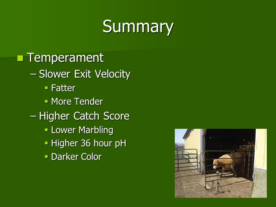 Summary Temperament Temperament –Slower Exit Velocity  Fatter  More Tender –Higher Catch Score  Lower Marbling  Higher 36 hour pH  Darker Color