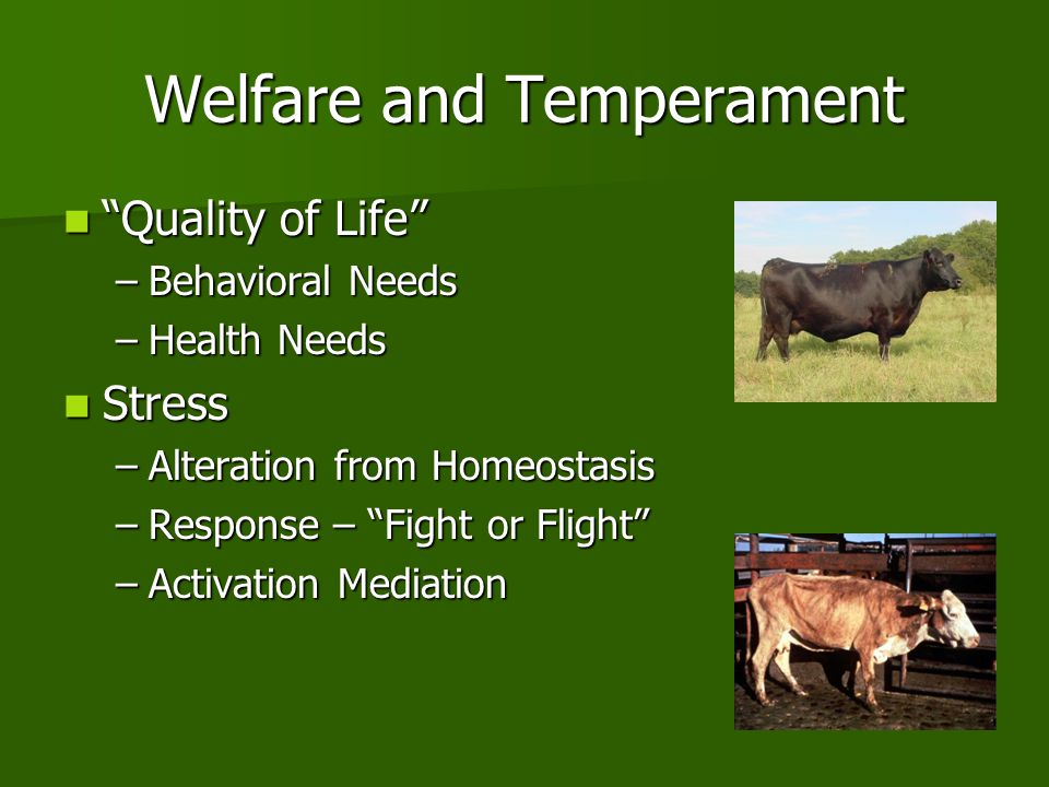 "Welfare and Temperament ""Quality of Life"" ""Quality of Life"" –Behavioral Needs –Health Needs Stress Stress –Alteration from Homeostasis –Response – ""Fi"