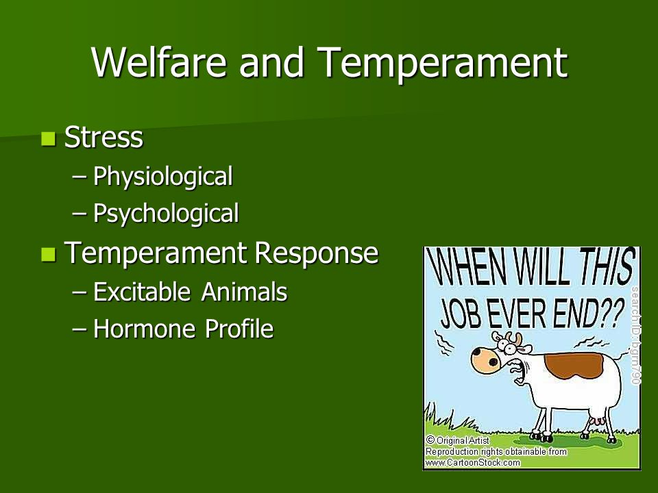 Welfare and Temperament Stress Stress –Physiological –Psychological Temperament Response Temperament Response –Excitable Animals –Hormone Profile