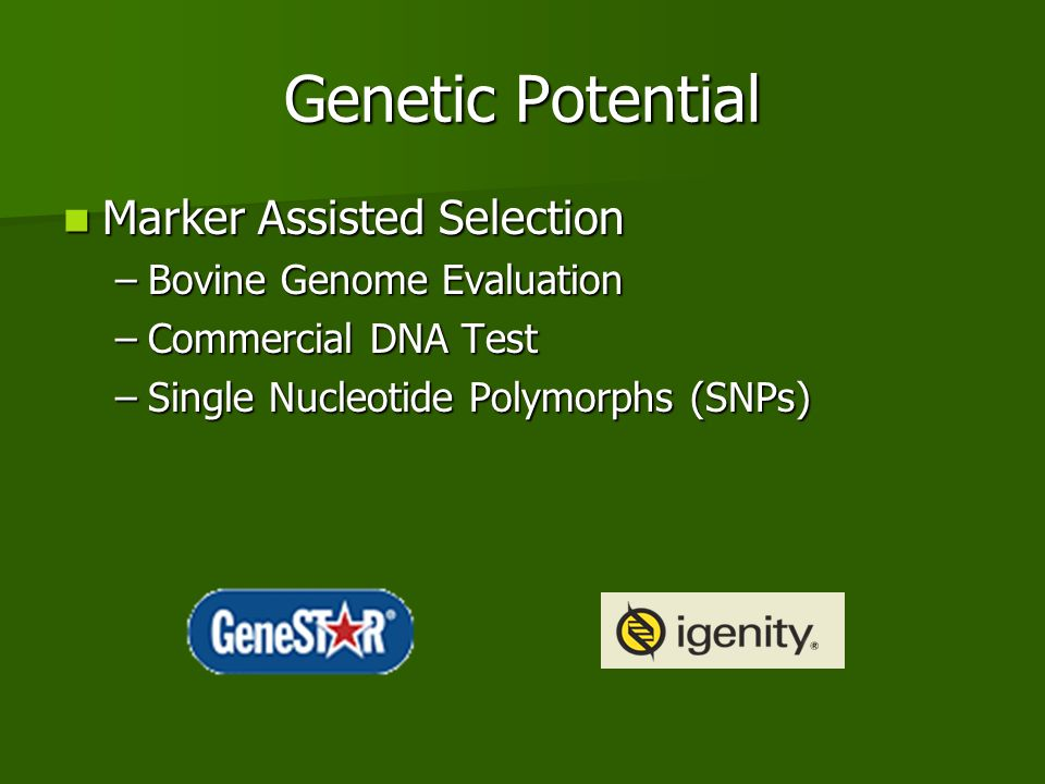 Genetic Potential Marker Assisted Selection Marker Assisted Selection –Bovine Genome Evaluation –Commercial DNA Test –Single Nucleotide Polymorphs (SN