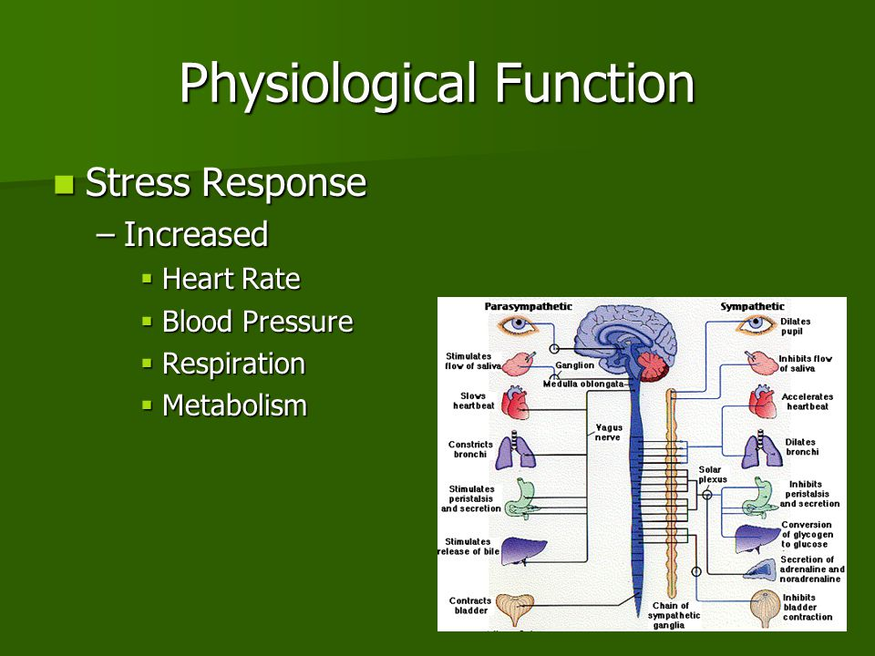 Physiological Function Stress Response Stress Response –Increased  Heart Rate  Blood Pressure  Respiration  Metabolism