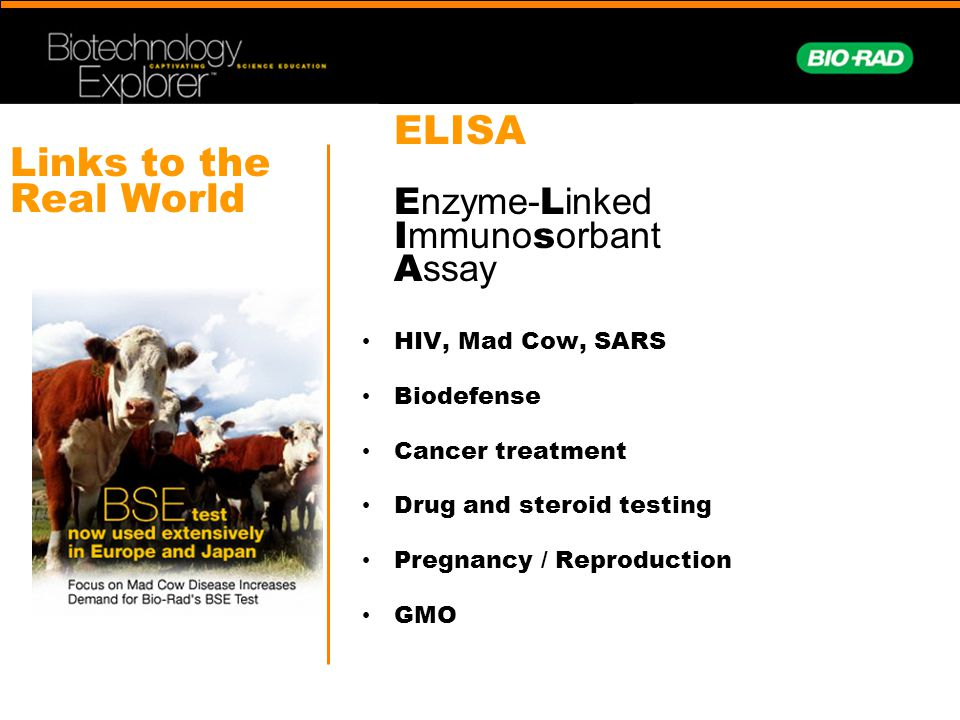 Links to the Real World HIV, Mad Cow, SARS Biodefense Cancer treatment Drug and steroid testing Pregnancy / Reproduction GMO ELISA E nzyme- L inked I